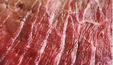 Aufgetautes Fleisch Wieder Einfrieren - angetautes fleisch f 252 r den hund wieder einfrieren