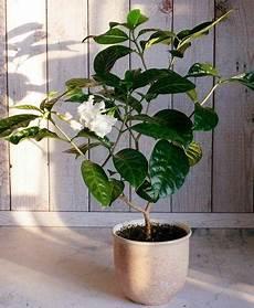 11 Plantes Vertes Dans La Chambre Contre Les Troubles Du