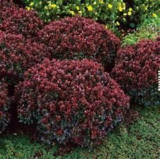 Des Arbustes Pour Petit Jardin Roses Guillot