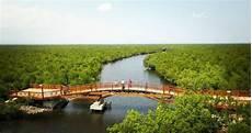 Contoh Teks Laporan Hasil Observasi Hutan Bakau Dapatkan