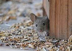 Haus Maus Foto Bild Tiere Natur Bilder Auf Fotocommunity