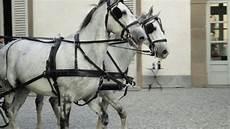 carrozze e cavalli carrozze e cavalli a disposizion