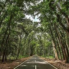 Pepohonan Yang Rindang Udara Yang Sejuk Dan Pemandangan