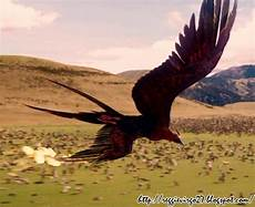 Gambar Burung Api Gambar Burung