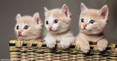 Inspirasi Baru 21 Contoh Gambar Kucing Yang Lucu
