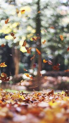 iphone 7 wallpaper fall 8 free autumn inspired iphone 7 plus wallpapers preppy