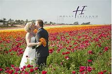 carlsbad ca famous flower field wedding photos with