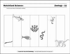 animal worksheets for high school 14306 animal worksheet new 635 animal classification worksheets for middle school