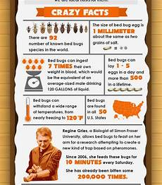 7 facts about bed bugs infographic bed bug guide
