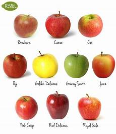 fruit for the office 10 types of apple