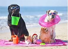 famille d accueil pour chien pendant les vacances un h 244 tel 224 narbonne plage acceptant les chiens holidayland