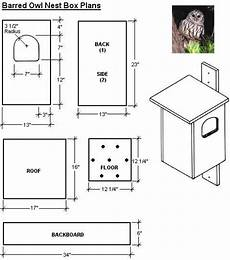 barred owl house plans free easy bird house plan screech owl bird house