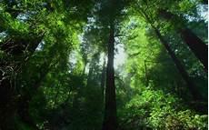 19 Gambar Anggrek Hutan Hujan Tropis Galeri Bunga Hd
