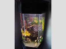 20 gallon aquarium long