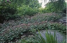 couvre sol sans entretien choisir entre gazon et plantes couvre sol gamm vert