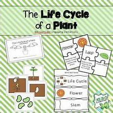 topic plants worksheets 13640 plant and growth topic word cards plant growth word card topic foundation stage knowledge