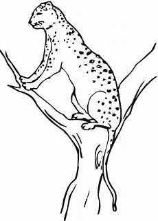 colouring pages free printable 17633 free printable cheetah coloring pages for