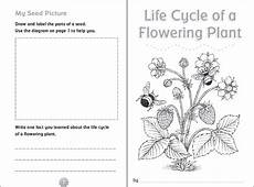 science plants worksheets for 3rd grade 13627 cycle of a flowering plant printable booklet cycles plant cycle teaching
