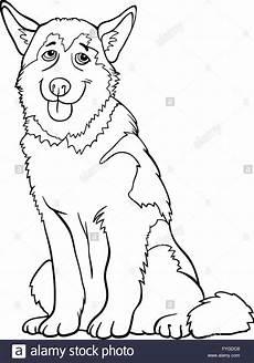 chien husky ou malamute pour colorier dessin anim 233 banque
