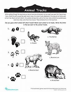 animal recognition worksheets 14025 identify animal tracks worksheet education