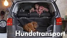 Hund Im Auto Transportieren Mit Lina De Mars