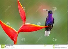 Malvorlage Vogel Mit Blume Tropischer Vogel Mit Roter Blume Kolibri Szene Der