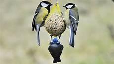 einheimische vögel im winter v 246 gel im winter richtig f 252 ttern ndr de ratgeber garten