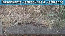 Rasenkante Verbrennt Und Vertrocknet Was Tun Tipps
