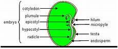 Pertumbuhan Pada Tumbuhan Bagian 1 Biosman8pku