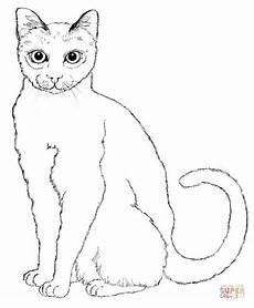 Ausmalbilder Siamkatze Sitting Cat Coloring Page Free Printable Coloring Pages