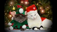 new funny pictures cat merry christmas and happy new year youtube