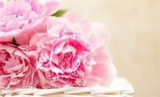 10 Fleurs Que Vous Ne Devriez Jamais Offrir 224 Quiconque