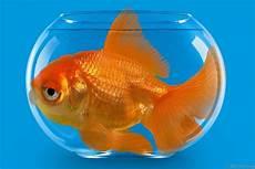 Terungkap Ikan Bisa Hidup Berbulan Bulan Tanpa