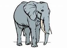 malvorlage elefanten erwachsene