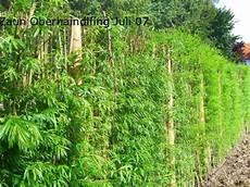 die hecke natuerlicher zaun und alternative zu zaun und hecke hecke pflanzen garten