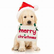 christmas puppy surprise sign merry christmas dog paw print etsy