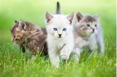 Der Erste Freigang Des K 228 Tzchens Zooplus Katzenmagazin