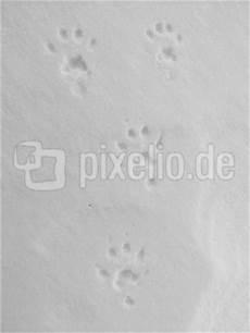 marderspuren im schnee kostenloses foto marderspuren im schnee pixelio de