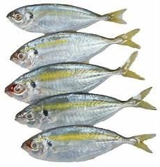 Frozen Ikan Selar Kuning 1kg Nikmart Halal Frozen
