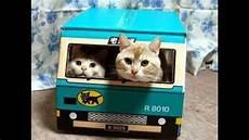 Kumpulan Foto Kucing Lucu Terbaik
