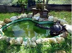 vasche d acqua come ricreare habitat naturale in casa per tartaruga