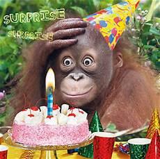 Birthday Card Quot Happy Birthday Quot Animal Orangutan
