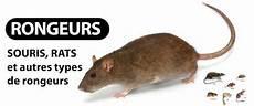Entreprise De D 233 Ratisation Traitement Anti Rat Souris