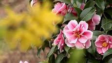 fiore di fiori di primavera hd 1440x1080 test panasonic p2