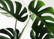 plante verte les 5 cl 233 s d un entretien facile et efficace
