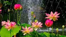 flower wallpaper lotus flower wallpaper hd of pink lotus flower