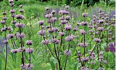 pflanzen für trockene schattige standorte langlebige stauden f 252 r sonnige standorte stauden