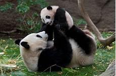 les animaux en voie de disparition jm blogguer sauvez les animaux en voie de disparition