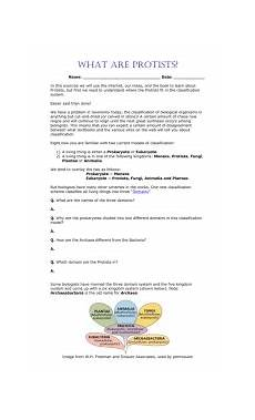 protist worksheet