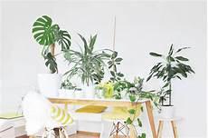 rankhilfe für zimmerpflanzen die besten zimmerpflanzen f 252 r die wohnung bonny und kleid